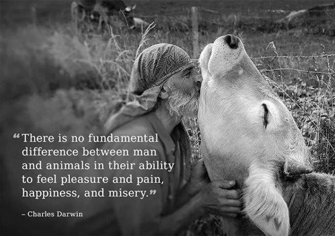 animalsdarwin